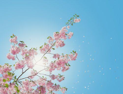 Ordningsexperten förverkligar sin dröm och möter våren i Flodafors | Keep it Smpl™