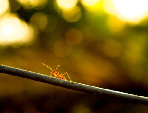 Myrstegsrevolutionen – kraften i det lilla steget!