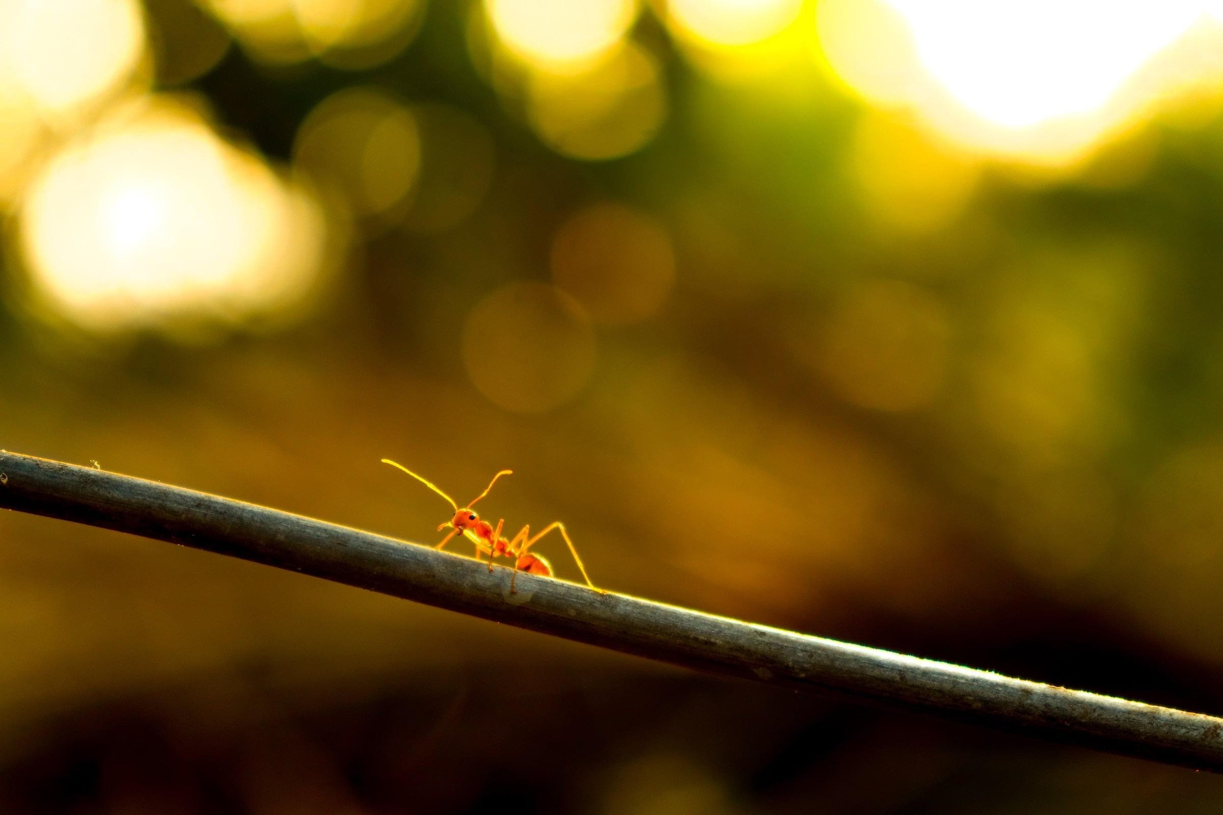 Myrstegsrevolution för att lyckas med nya vanor